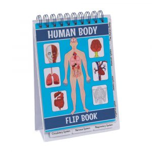 All About Our Bodies Flip Books